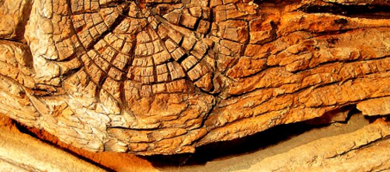 De geur van hout in parfum