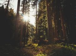Eiken houten tuinkamer, een deugd in de herfst